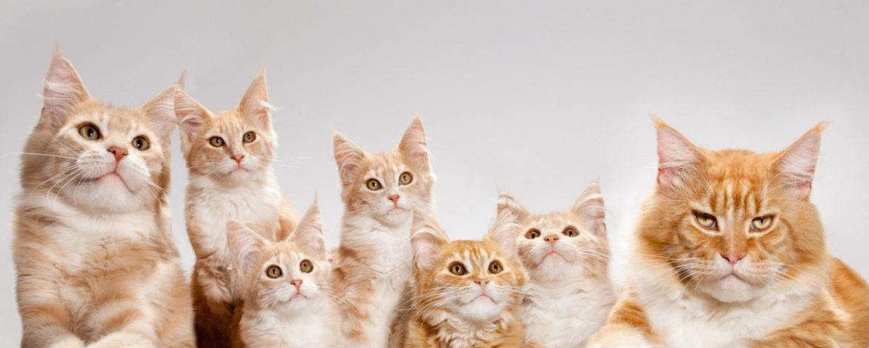 Пакеты для кошачьего наполнителя в компании «Полимер Стандарт»